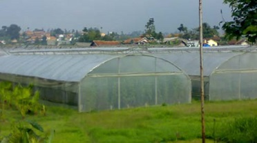 Greenhouse Type Tunnel KMU GR 01